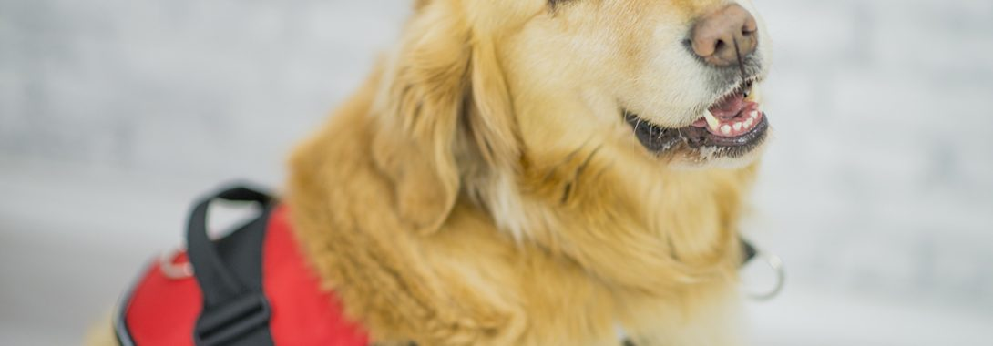 Fleet to pay trucker $22,500 after requiring fee for service dog